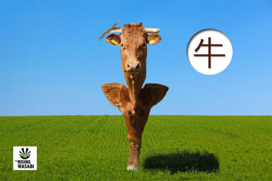 The Origin Of Kanji: Cow (牛)